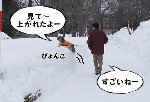 さんぽぽ11