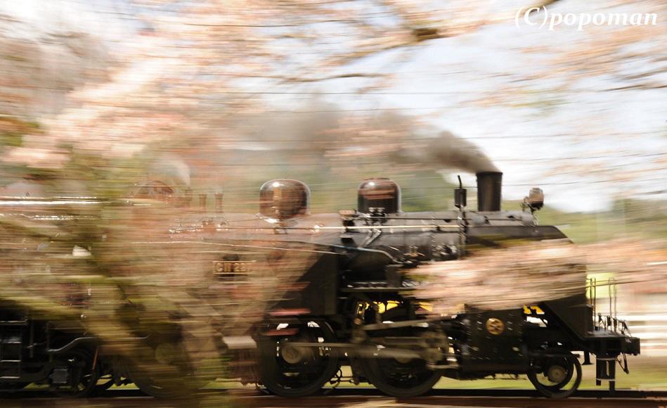DSC_7474 - コピー2017 4 16 大井川鐵道 大和田~家山 回転 トリミング 580 popoman