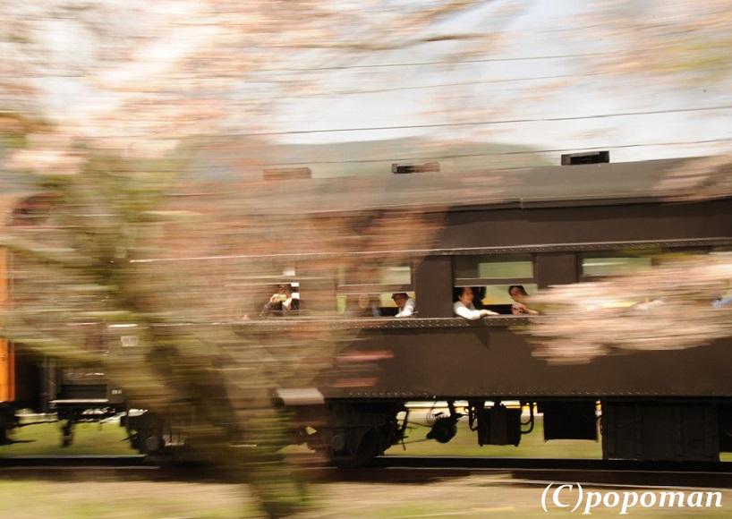 DSC_7480 - コピー2017 4 16 大井川鐵道 大和田~家山 回転2トリミング2 818 580 popoman