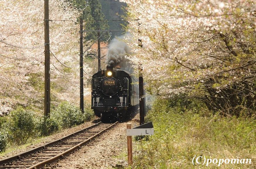 DSC_7575 - コピー2017 4 16 大井川鐵道 田野口~駿河徳山 871 580-2 popoman