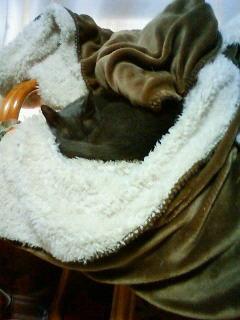 大好きなモフモフ毛布とイスの上で・・・