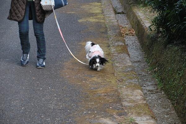 散策中ルビー