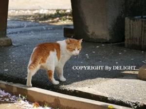霊堂にいた猫