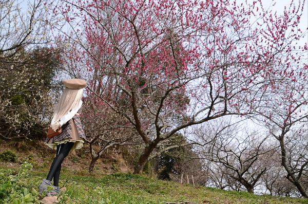 小隠里@月ヶ瀬の梅まつり