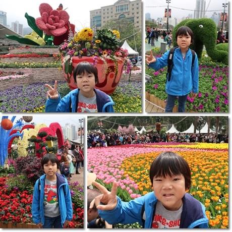 flower show 2017-1