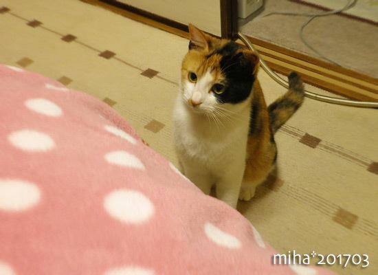 miha17-03-123.jpg