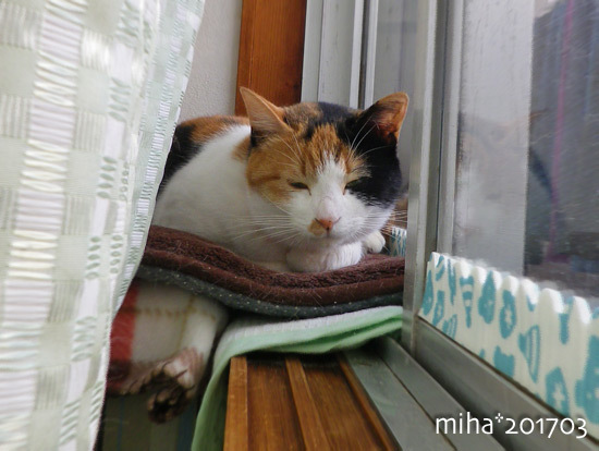 miha17-03-51.jpg