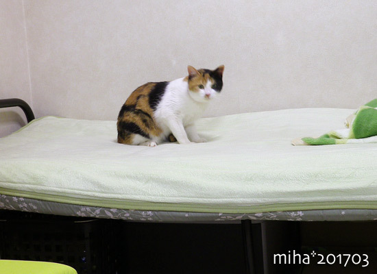 miha17-03-64.jpg