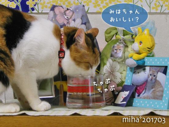 miha17-03-96.jpg
