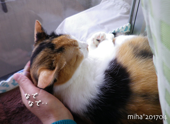 miha17-04-193.jpg