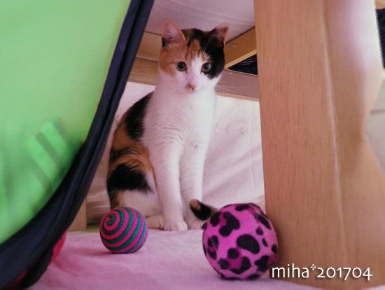 miha17-04-241.jpg