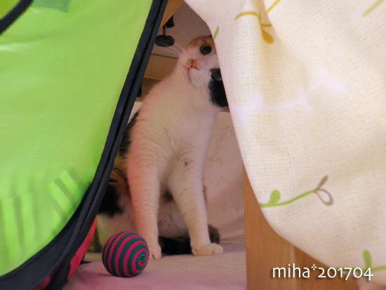 miha17-04-253.jpg