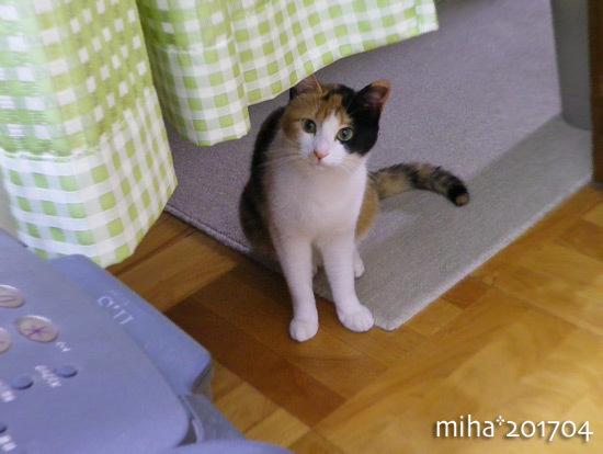 miha17-04-40.jpg