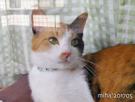 miha17-05-63.jpg