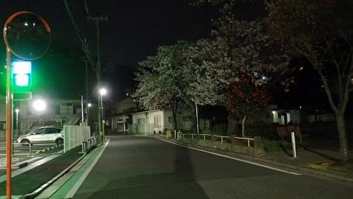 桜 2017-04- (5)