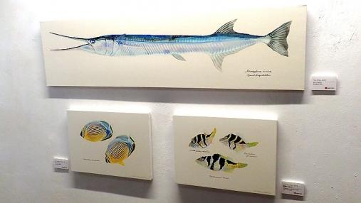 魚の肖像Ⅱ 2017-05-02 (5)