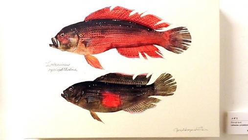 魚の肖像Ⅱ 2017-05-02 (8)
