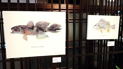 魚の肖像Ⅱ 2017-05-02 (24)