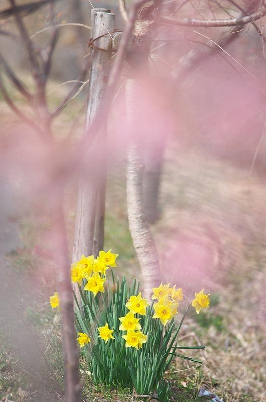 春の陽射しの中で