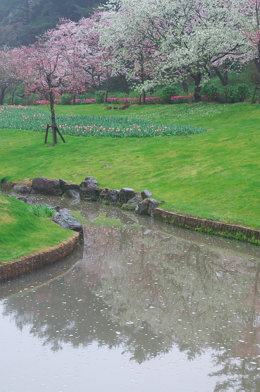 雨のフラワーパーク 2