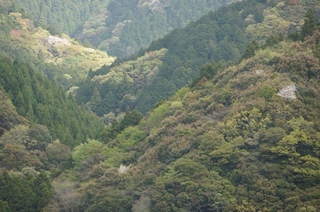 掛川の山ン中