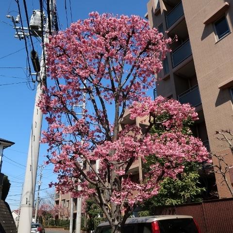 06IMG_8901荏田西2-3 (800x800) (480x480)