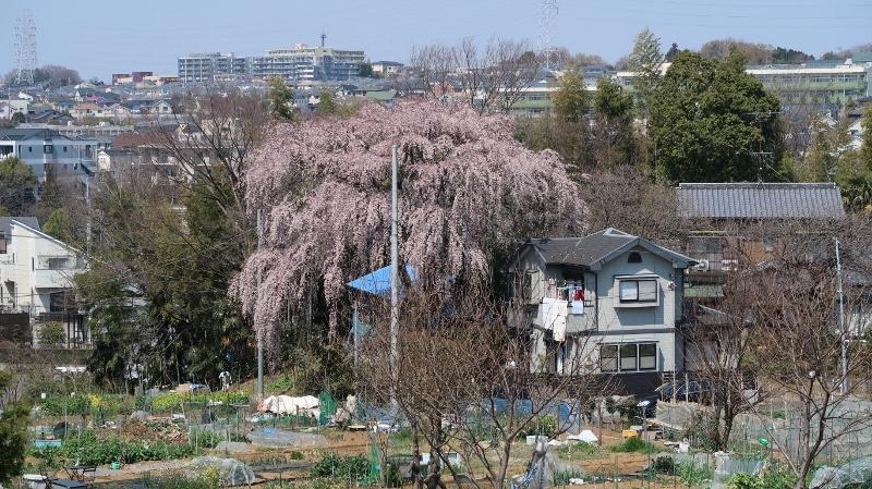 04IMG_0108青葉区元石川町7421 (800x449)