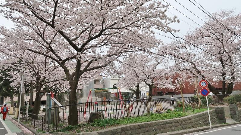 08IMG_0548麒麟園 (800x449)