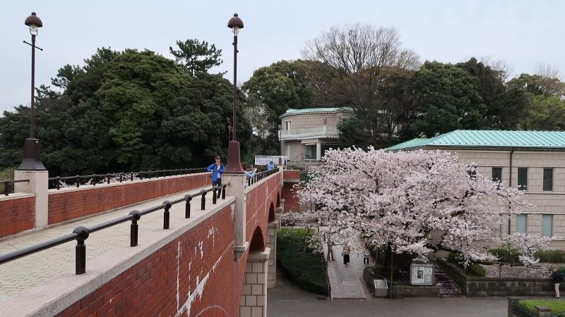 13IMG_0591近代文学館の霧笛橋 (800x450)