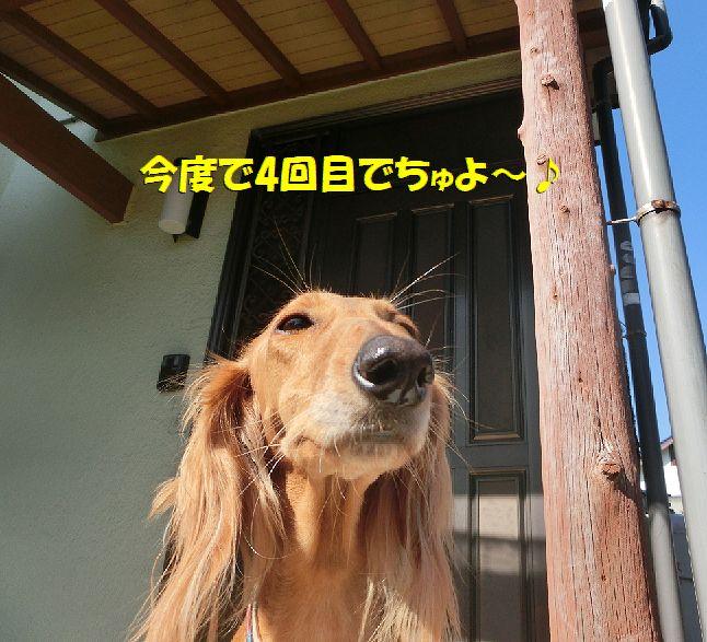 b_20170401001948e23.jpg