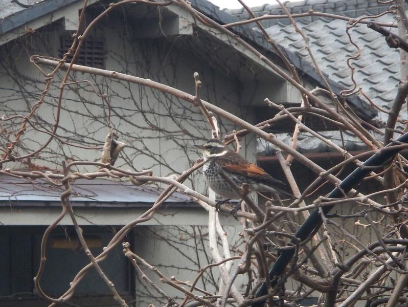 1704_birds02