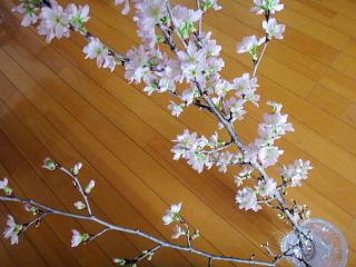 2017年の啓翁桜