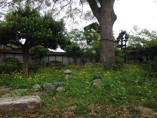 こおり舎お庭