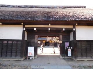 0225ymisonokhina1.jpg
