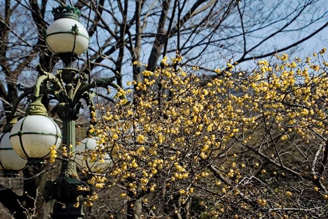 640DSC_4389s皇居正門石橋旧飾電燈