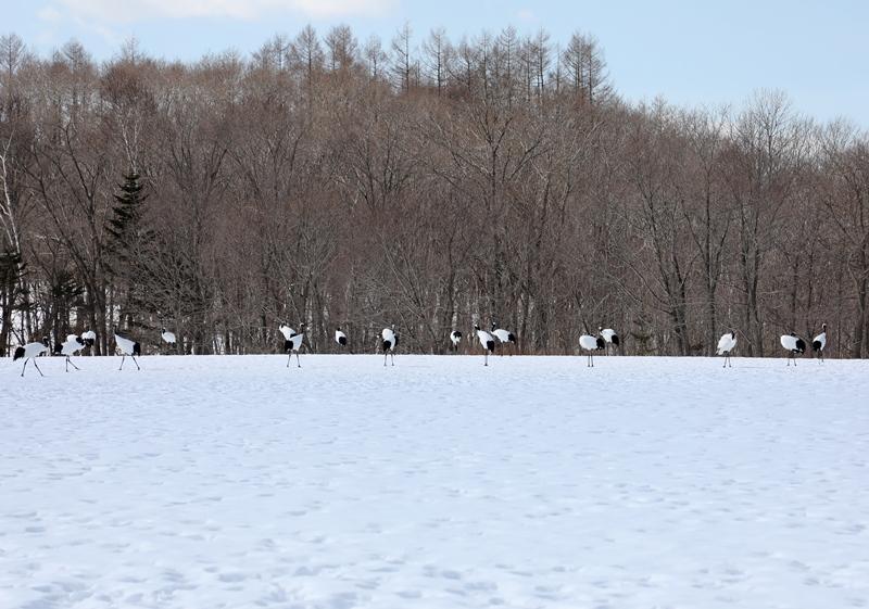 雪の風景6170218