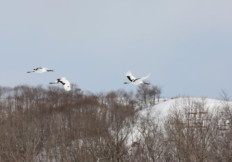 雪の風景7170218