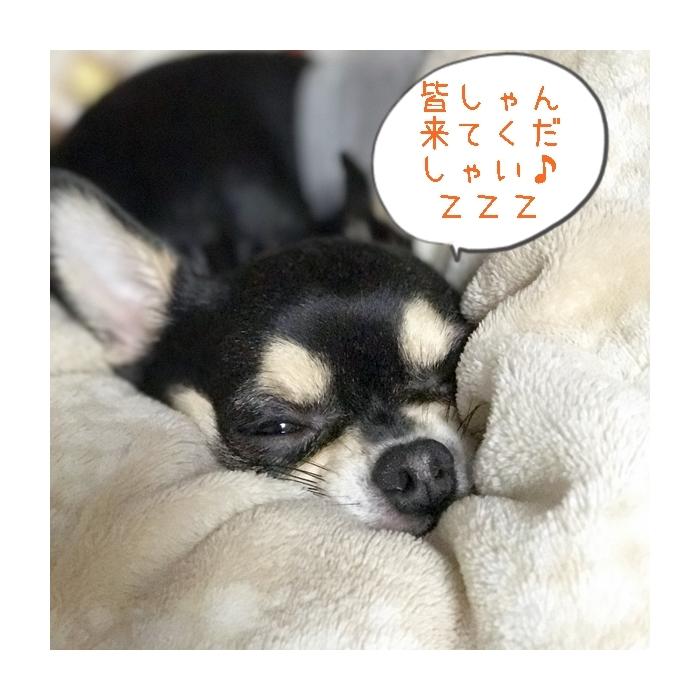 2017-04-13 ちまき (3) ブログ用