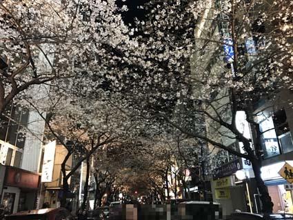 桜あったし