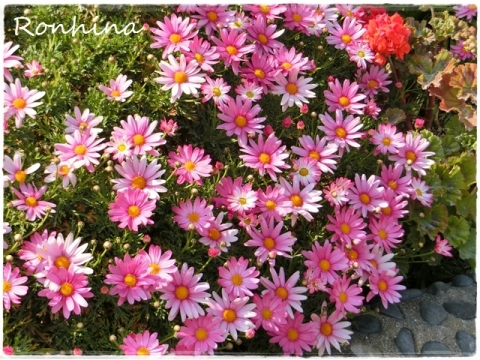 お花の季節④