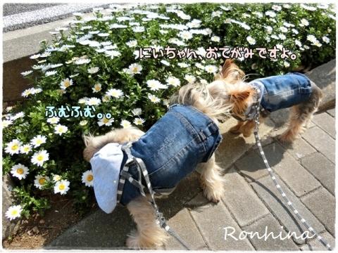 お花の季節②