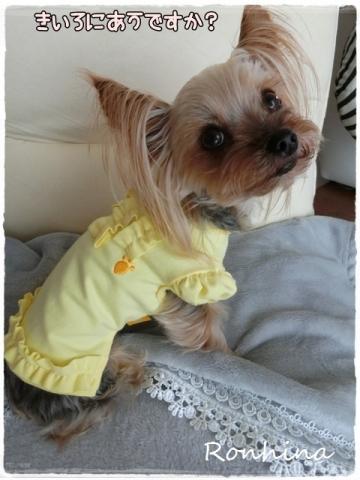 黄色の洋服③