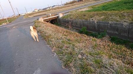 翔 2017.3.19-3