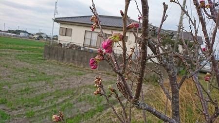 桜 2015.3.25