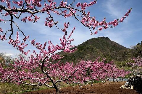 桃畑と蜂城山
