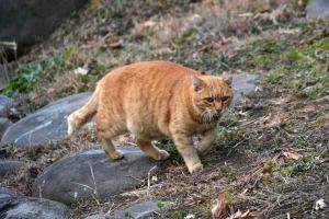 Bu The Cat