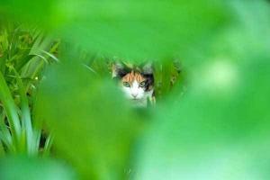 September Cat