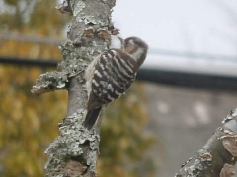 鳥 005 (480x360)