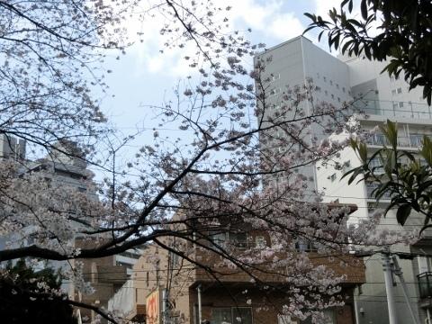 桜 005 (480x360)
