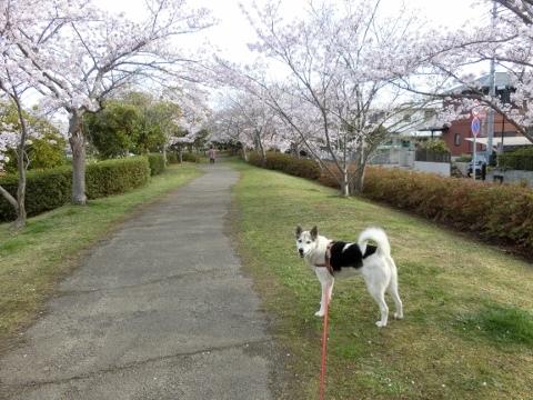 散歩と猫 039 (480x360)